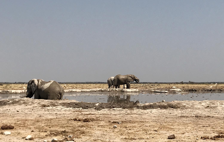 Elefanten am Wasserloch im Nxai Pan National Park