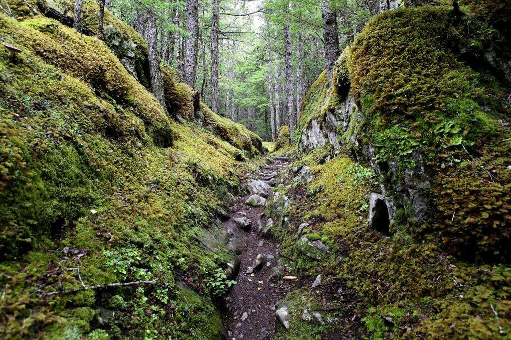 Trail-Abschnitt wie aus einem Märchenwald.
