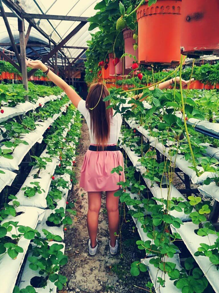 Sarah im Erdbeer Paradies auf einer Erdbeerfarm in Malaysia.