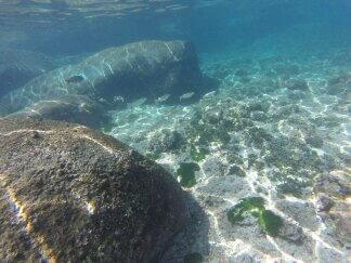 Unter Wasser am Strand auf Tioman.