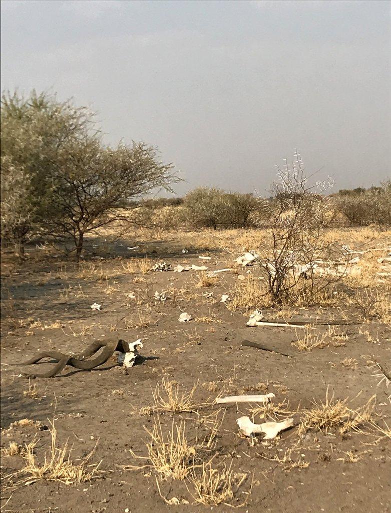 Schlachtfeld am Sunday Pan Waterhole im Central Kalahari Park, Botswana