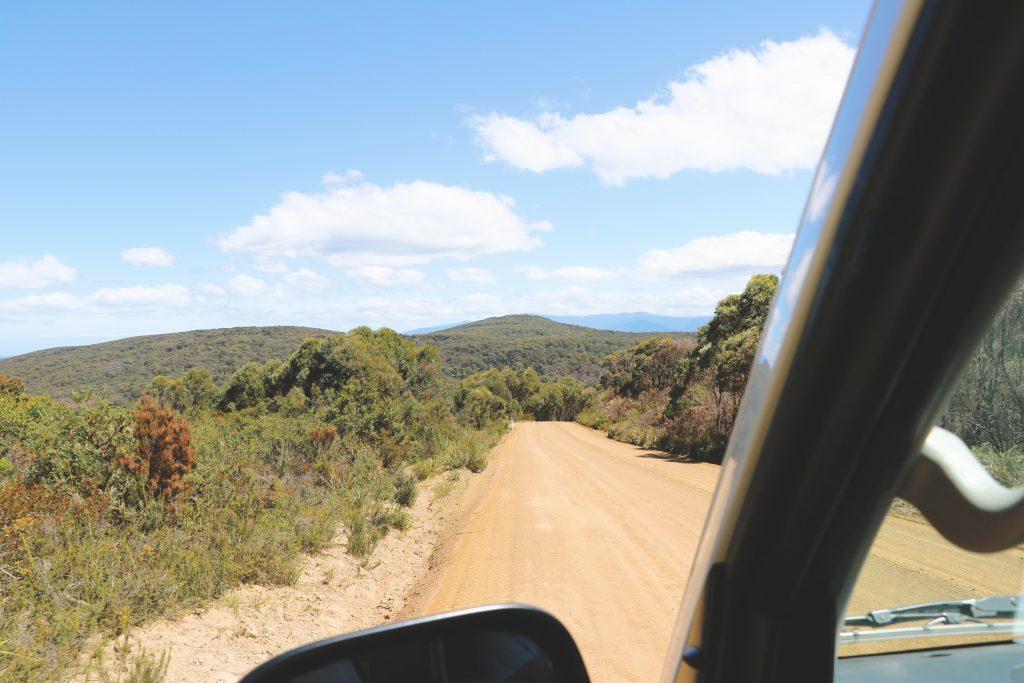 Blick aus dem Fahrerfenster des Campervans, mit dem Ania und Daniel das dichte Grün Tasmaniens erkunden.