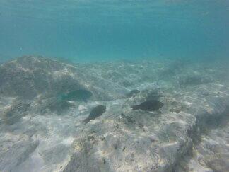 Unterwasseraufnahme: Fische im Wasser auf Tioman  in Malaysia.