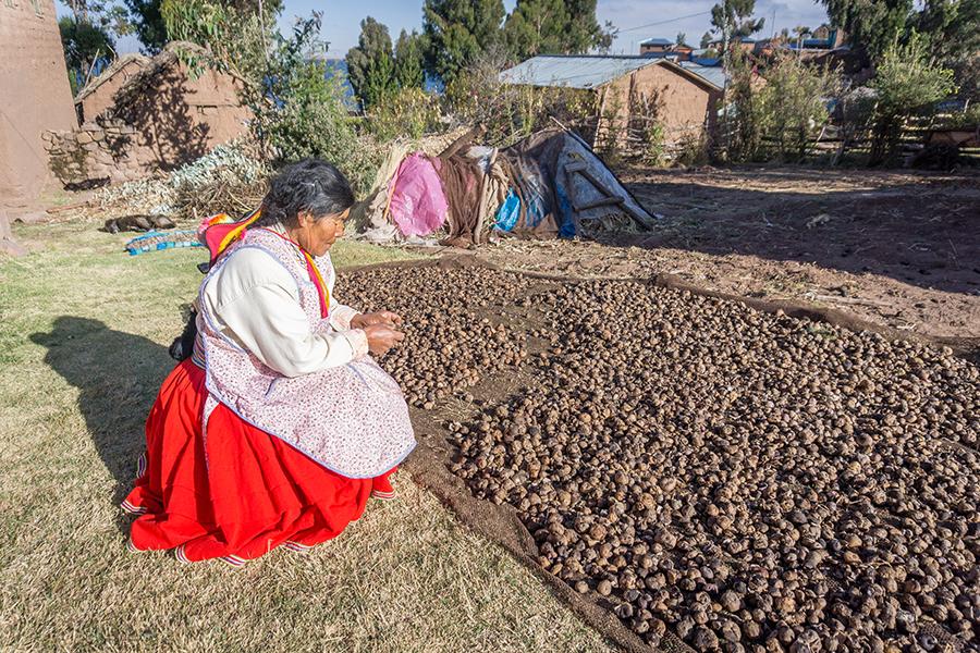Quechua-Frau beim Trocknen von Gemüse in der Stadt Puno in Peru.