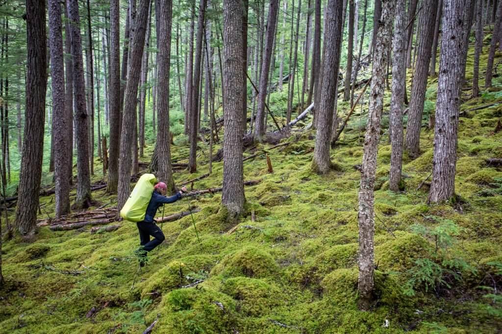 Dirk läuft durch einen Nadelwald am Chilkoot Trail.