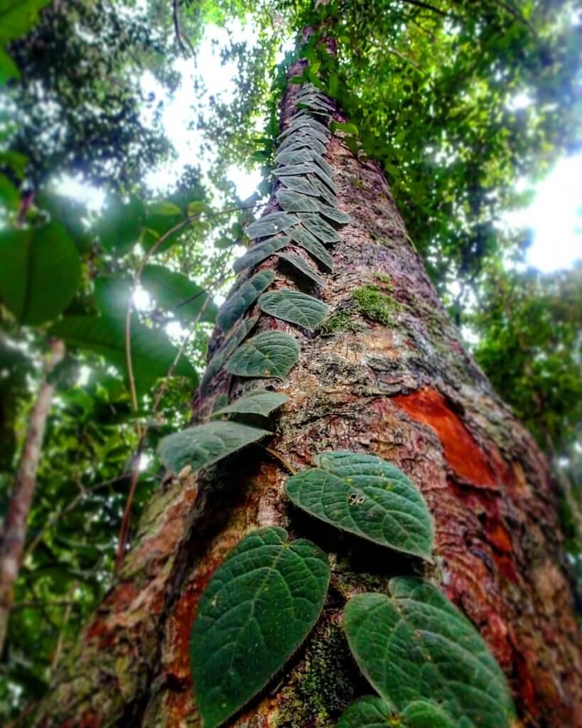 Pflanzenvielfalt in Malaysia.