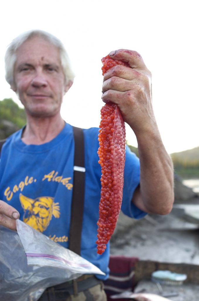 Yukon River Kanutour - Andy mit Fischeiern für die Herstellung von Kaviar.