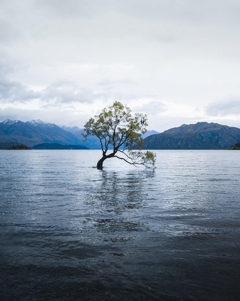 Roadtrip Neuseeland: Ein Halt am berühmten Wanaka Tree ist Pflicht.