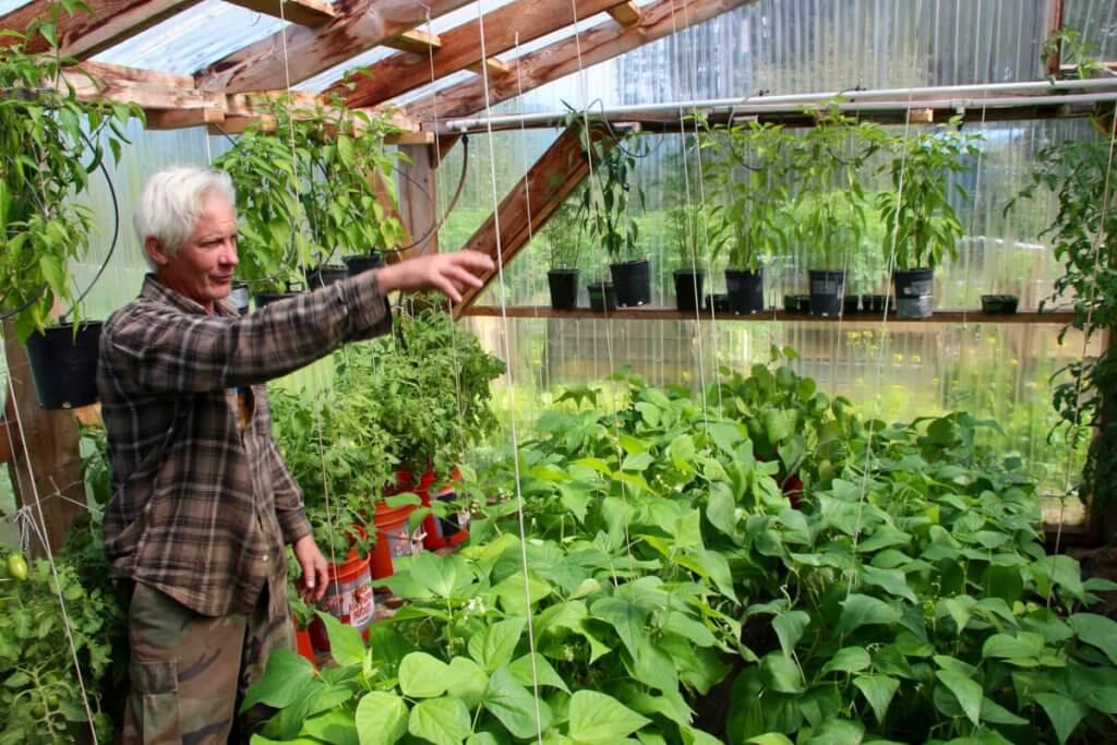 Andy erklärt uns den Gemüseanbau im Gewächshaus und wir naschen ein paar leckere Erbsen.