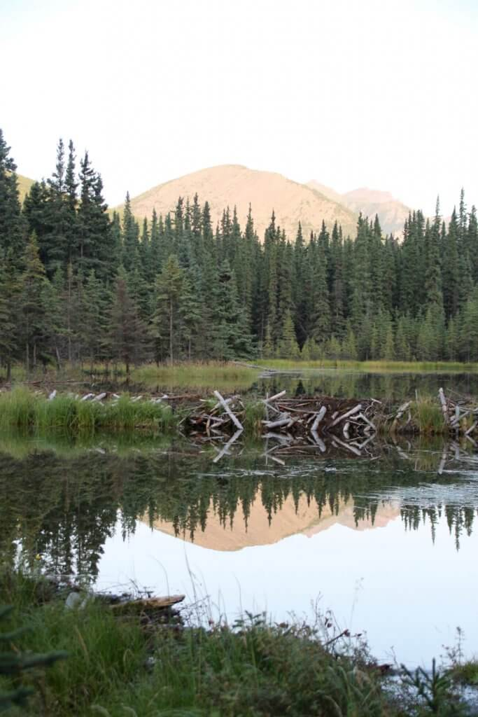 Bergkette und Biberdamm am Horseshoe Lake in Alaska.