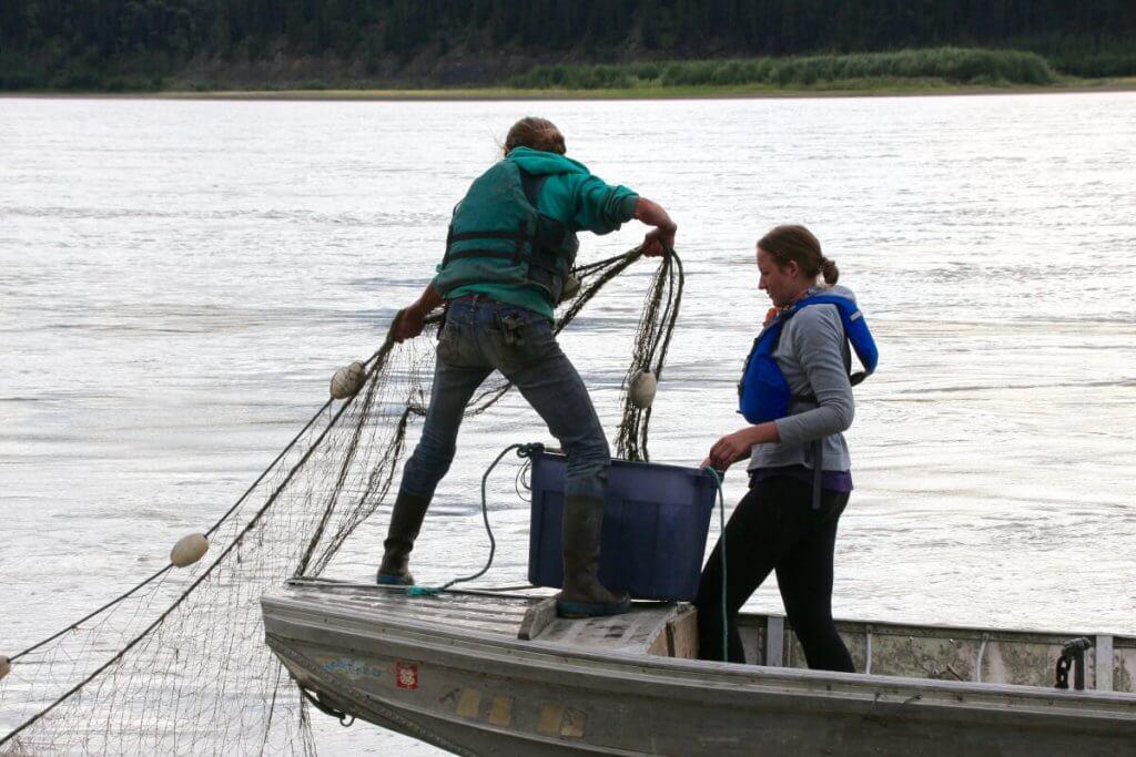 Vorsichtig ziehen wir das Netz aus dem Wasser, nachdem wir alle Lachse daraus befreit haben.