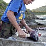 Yukon River Kanutour - Andy schneidet einem Fisch den Kopf ab.