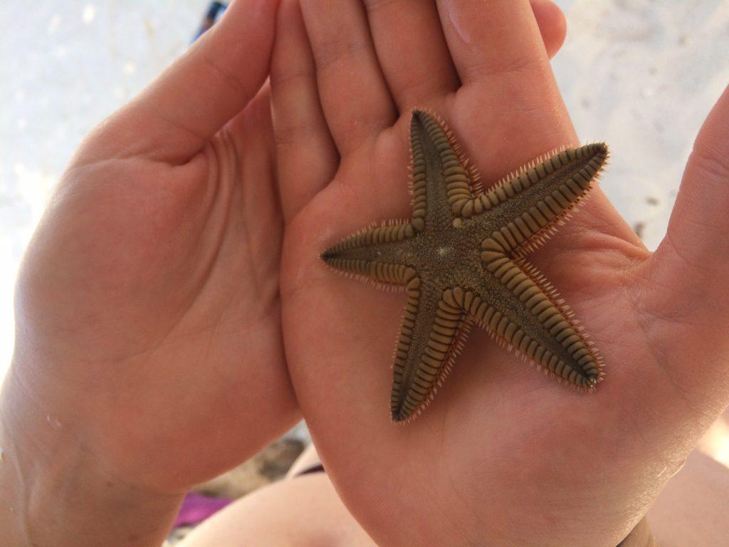 Roadtrip Yucatan - Nahaufnahme eines Seestern, den Sophie in ihren Händen hält.