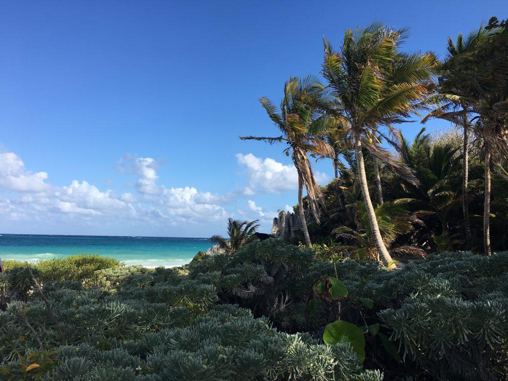 Roadtrip Yucatan - Strand mit Palmen in der Nähe der Mayaruinen-Stätte Coba nahe Tulum in Mexiko.