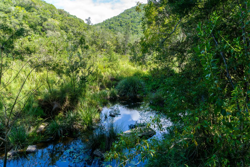 Garden Route Südafrika - Einzigartige Natur am Fluss Touw nahe der Stadt Wilderness.