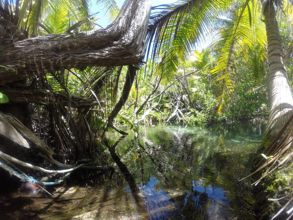 Roadtrip Yucatan - Palmen und Gewässer in der Bucht von Playa Chemuyil in Mexiko.