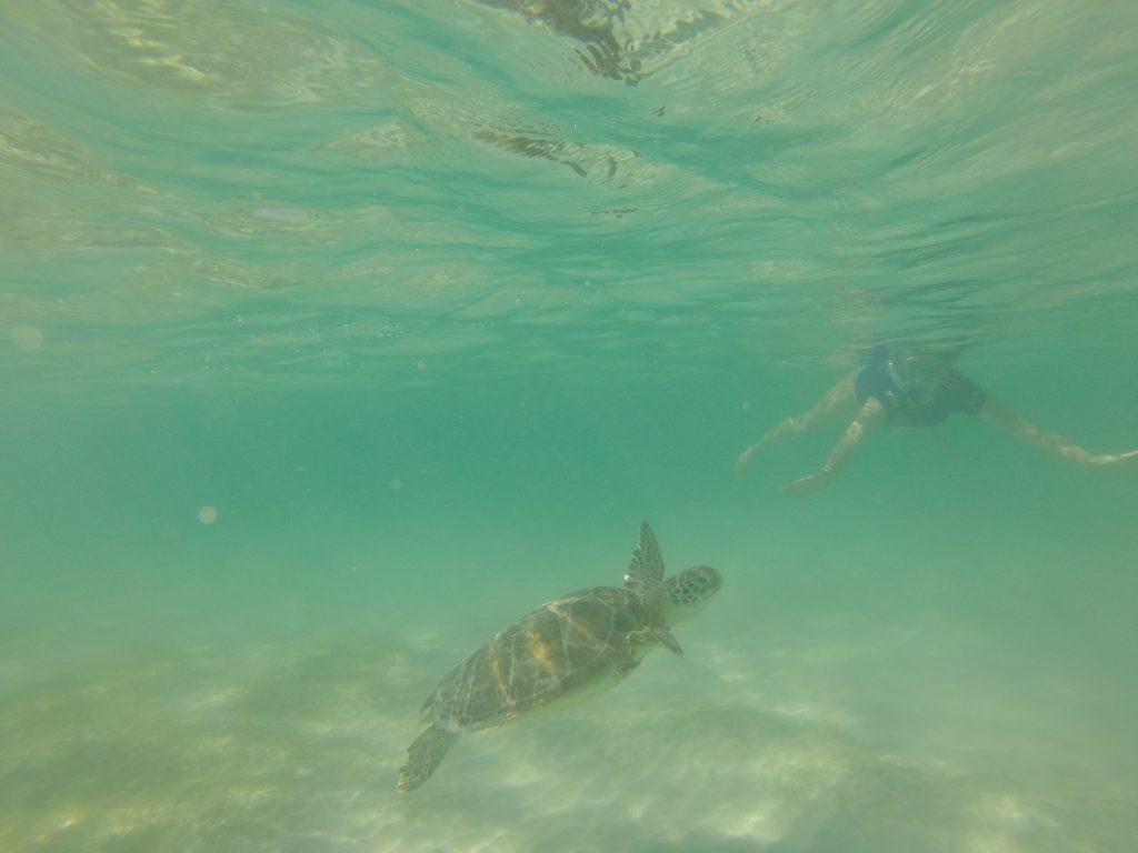 Roadtrip Yucatan - Sophie taucht mit einer Meeresschildkroete in Akumal, Mexiko.
