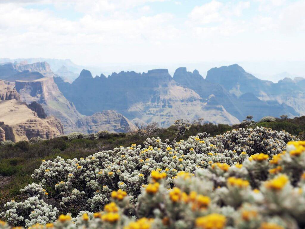 Die Drakensberge im Rücken.