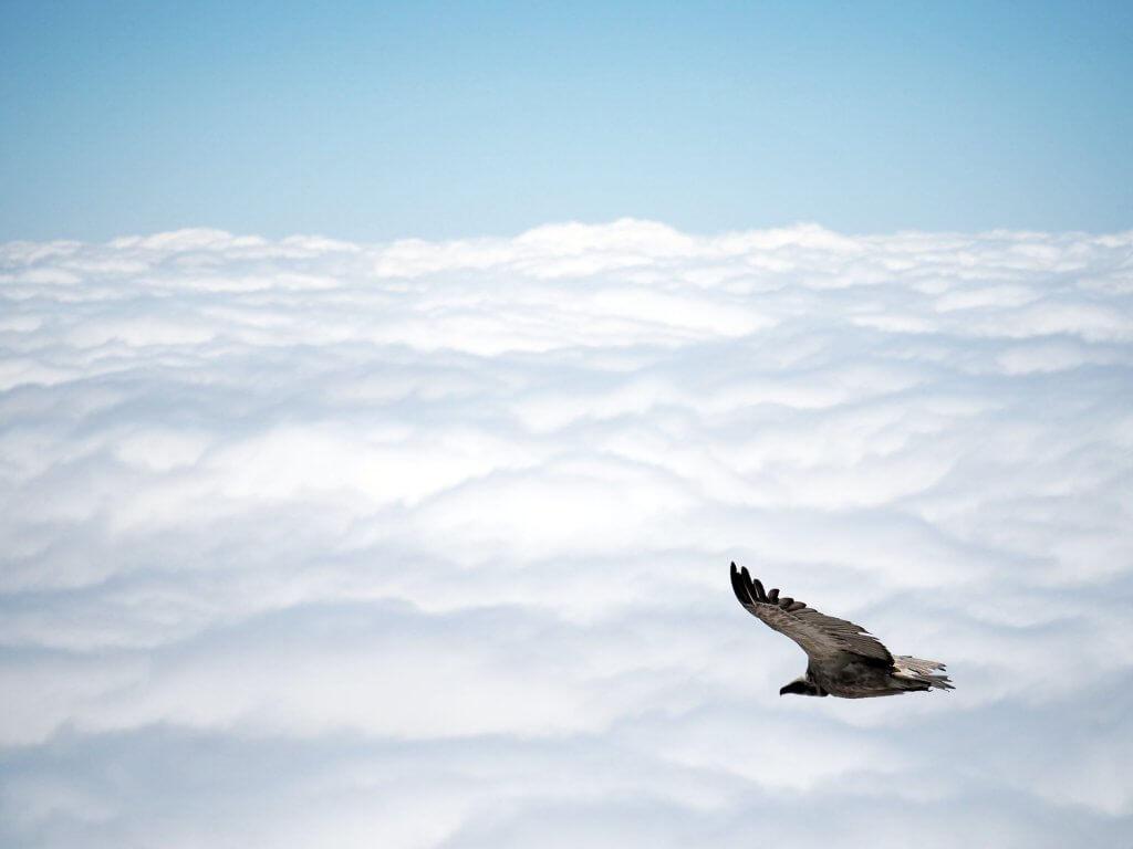 Geier über den Drakensbergen in Südafrika.
