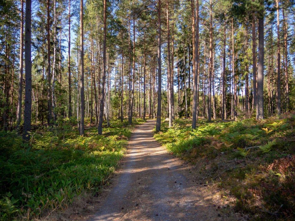 Der Roslagsleden Weitwanderweg führt durch bewaldetes Gebiet.