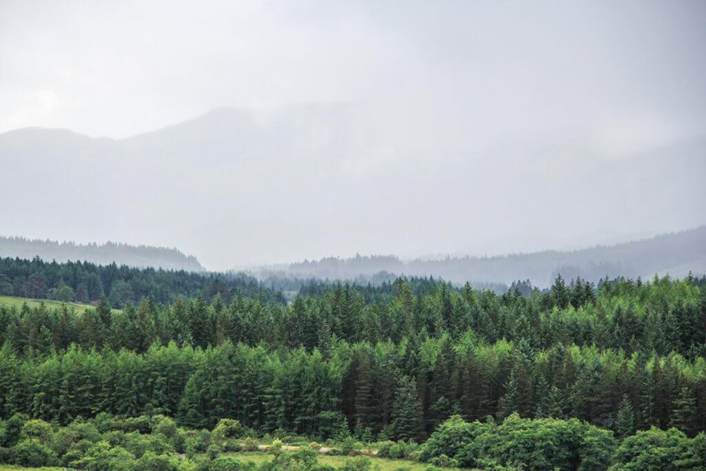 Trekking auf dem West Highland Way: Wald soweit das Auge reicht.