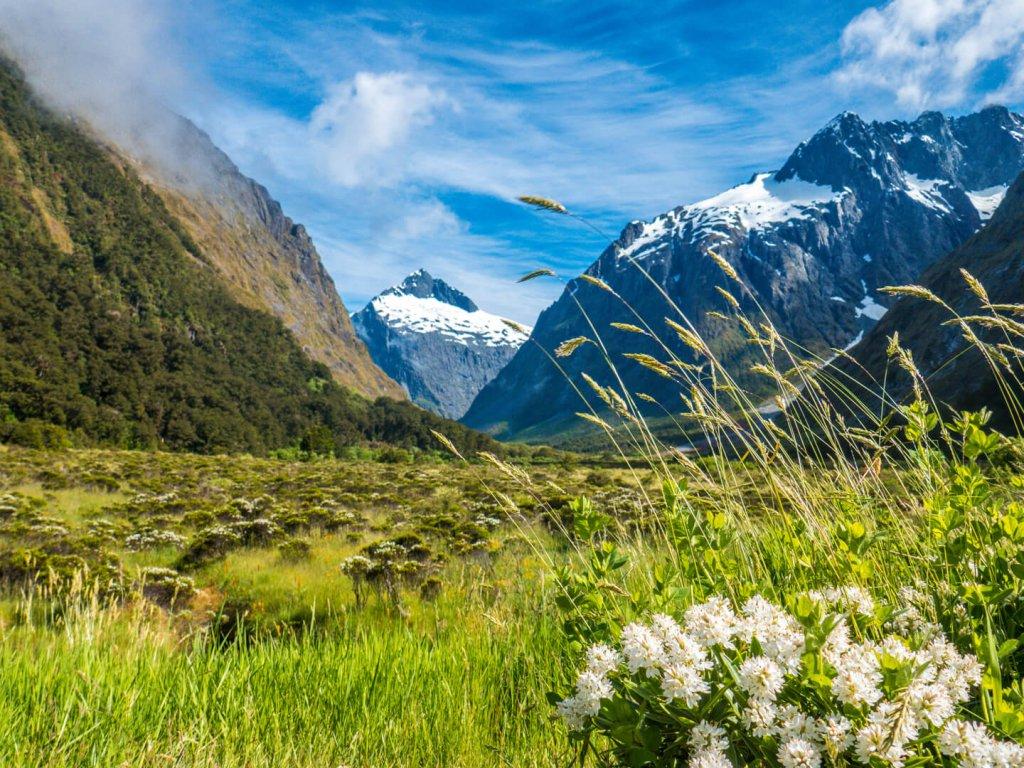 Blühende Landschaft und schneebedeckte Berggipfel der Milford Sounds in Neuseeland.