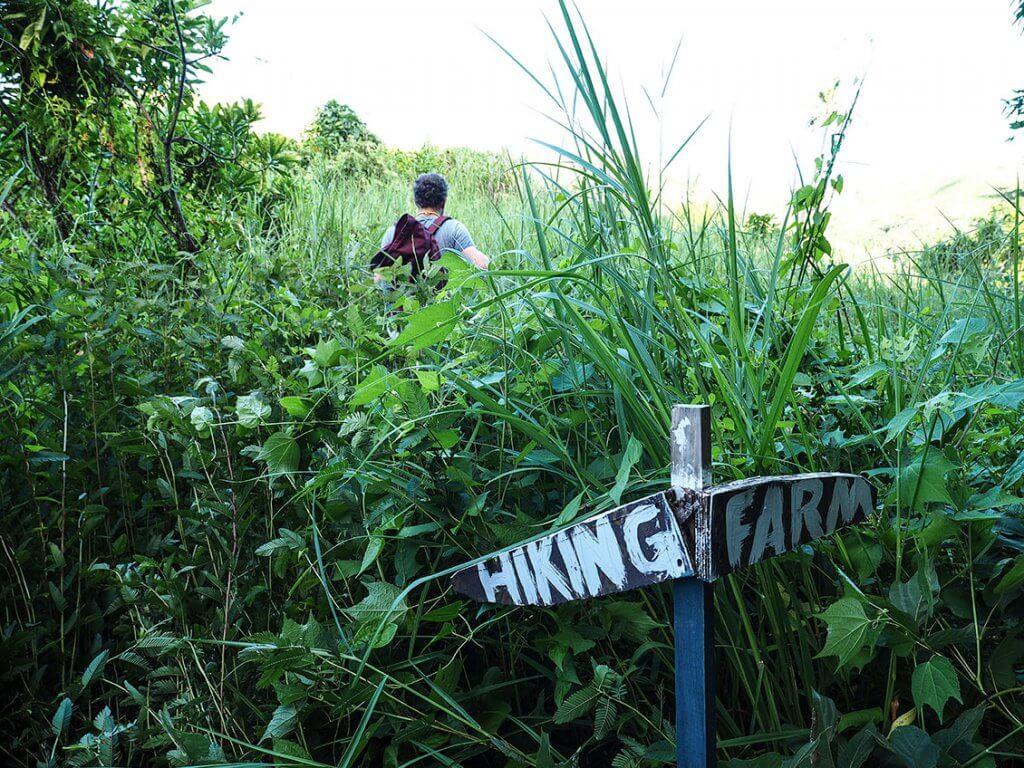 Dichtes Gestrüpp eines Wanderweges auf Matacawulevu-Island.