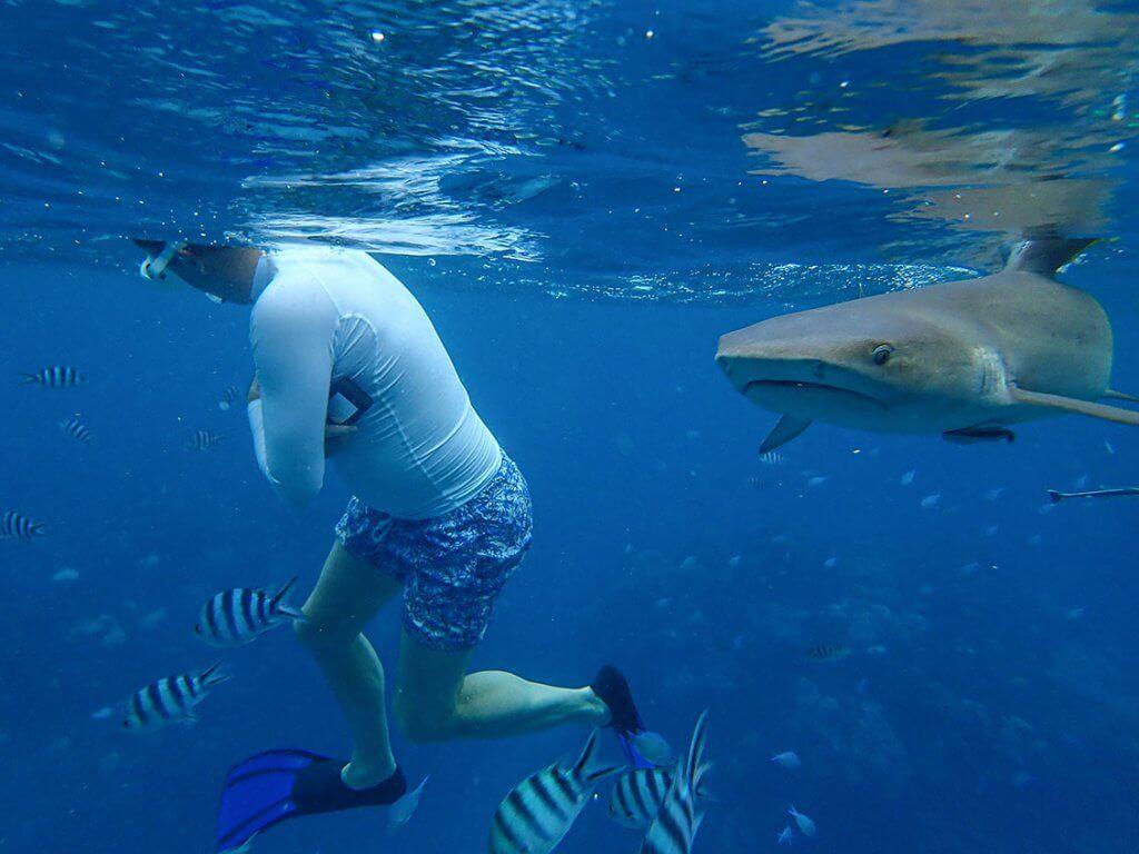 Michi Bösiger beim Schnorcheln. Ein Riff-Hai kommt direkt auf ihn zu.