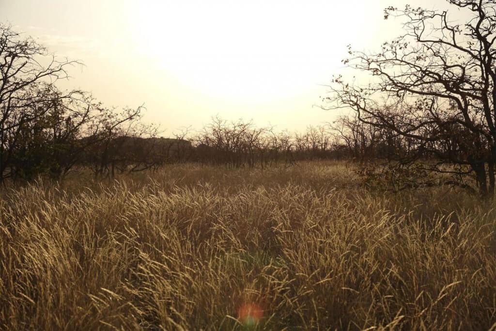 Wunderschöne Savanne im Mapungubwe Nationalpark.