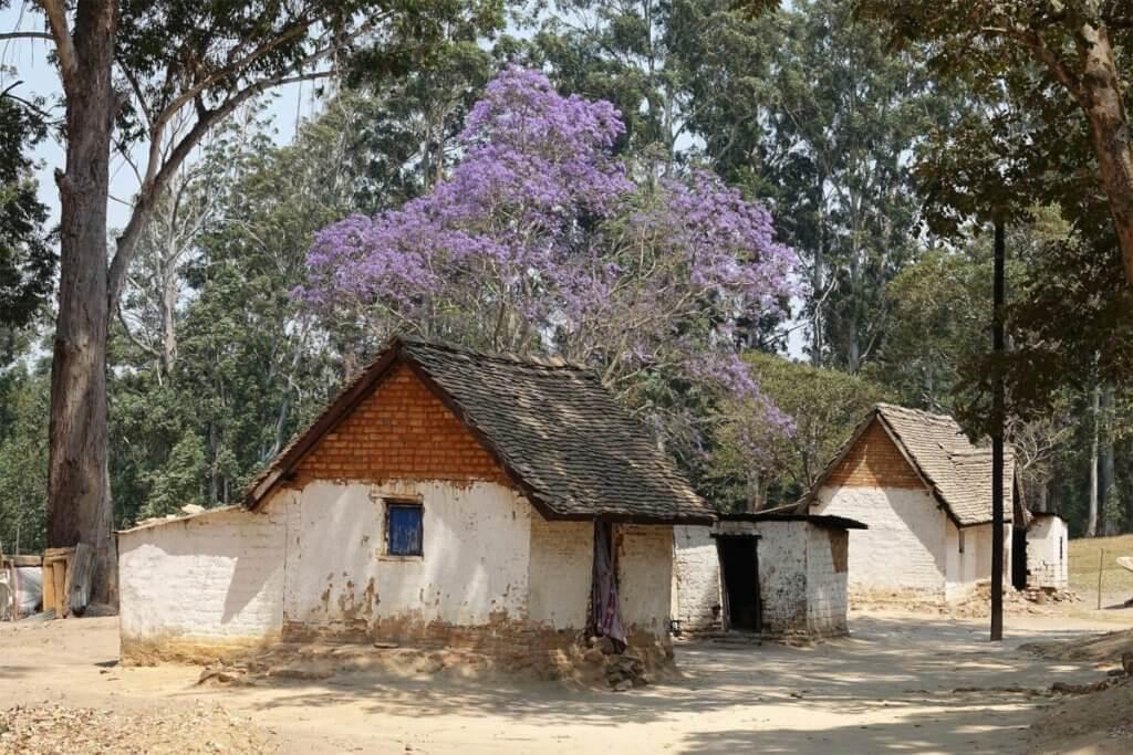 Blühender Baum auf dem Gelände des Shiwa Ngandu Herrenhauses in Sambia.