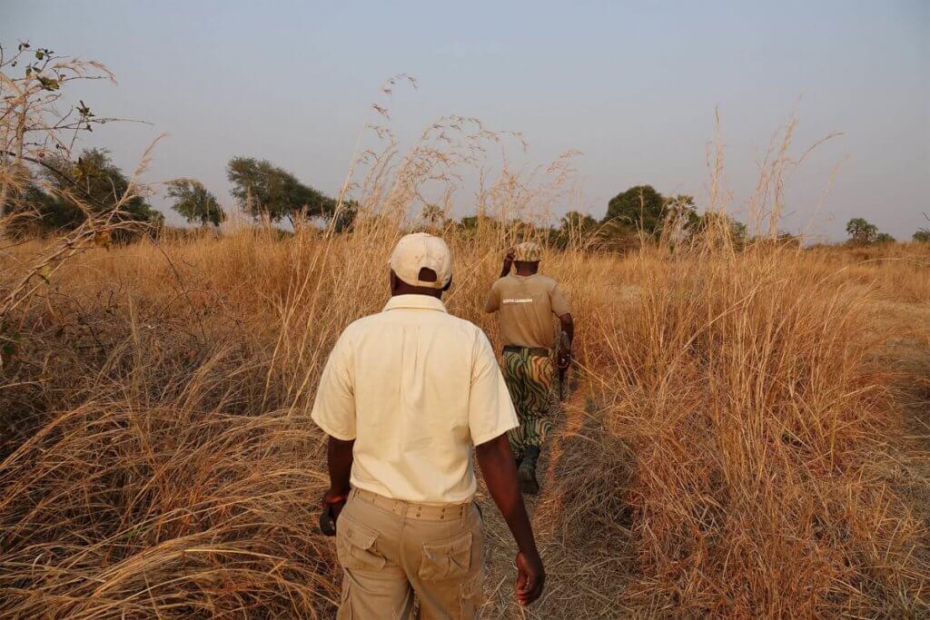 Mit Scout und Trägern bei der Walking Safari im North Luangwa.