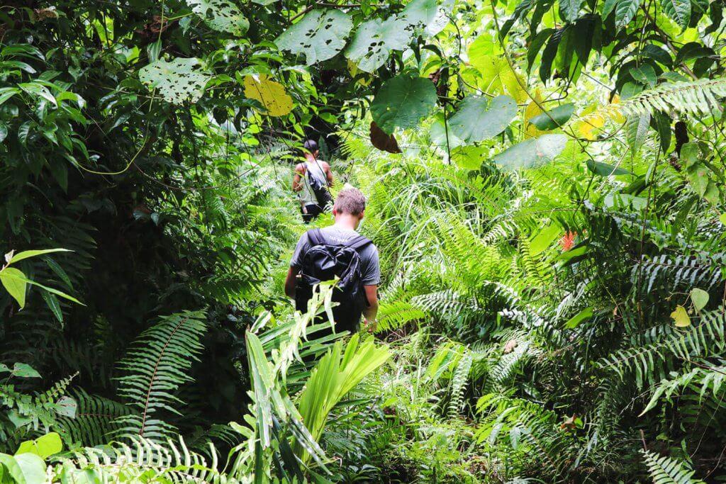 Rundreise Sulawesi - Daniel beim Trekking durch den dichten Dschungel der Togian Inseln.