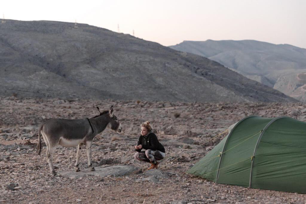 Ein kleiner Wildesel besucht Joanna vor ihrem Okisba-Zelt in Khasab, Oman.