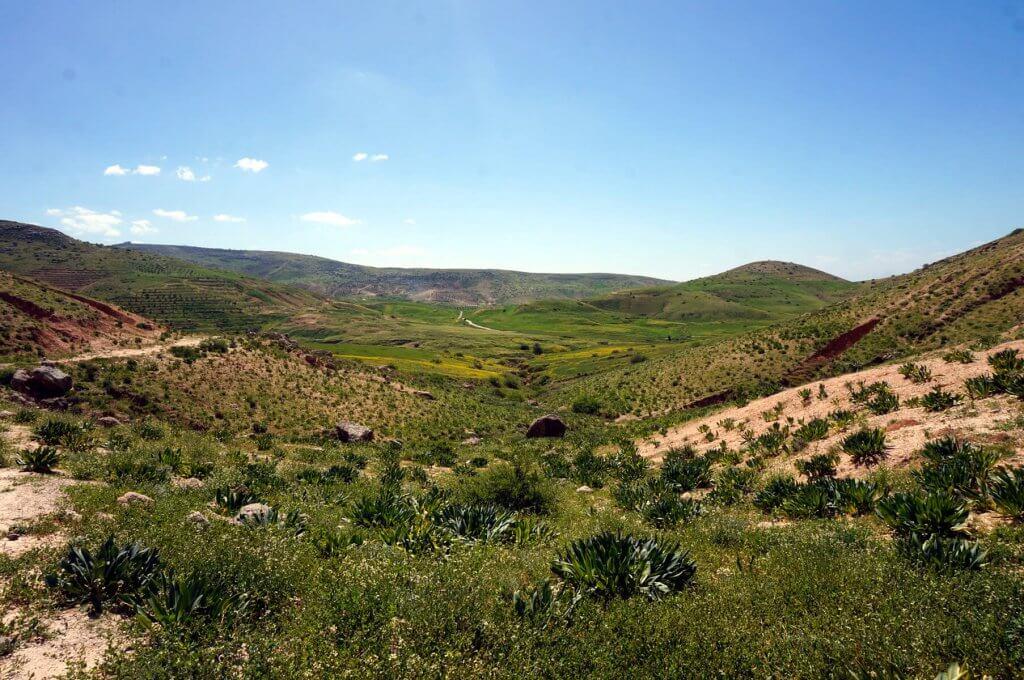 Grüne Landschaft im Norden von Jordanien.