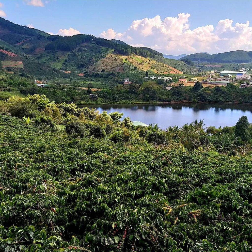 Kaffeeplantage in Dalat, Vietnam.