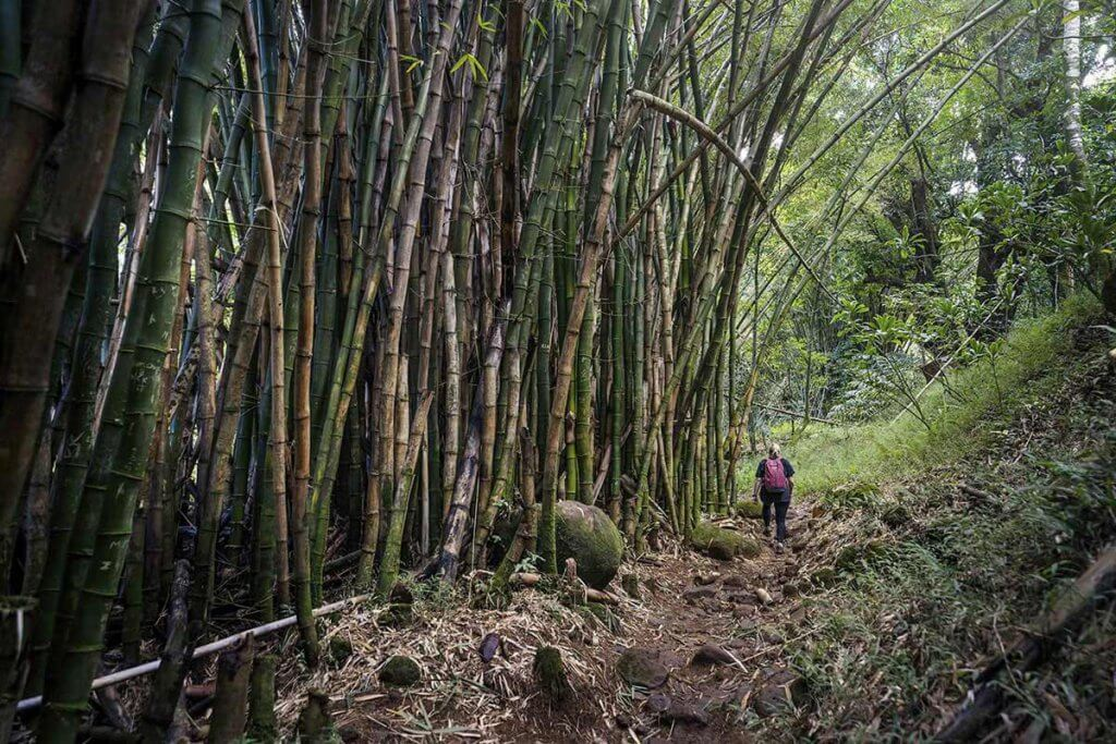 Katrin läuft auf dem Hanakapa'ai Falls Trail an dicht bewachsenen Bambus-Hainen vorbei.